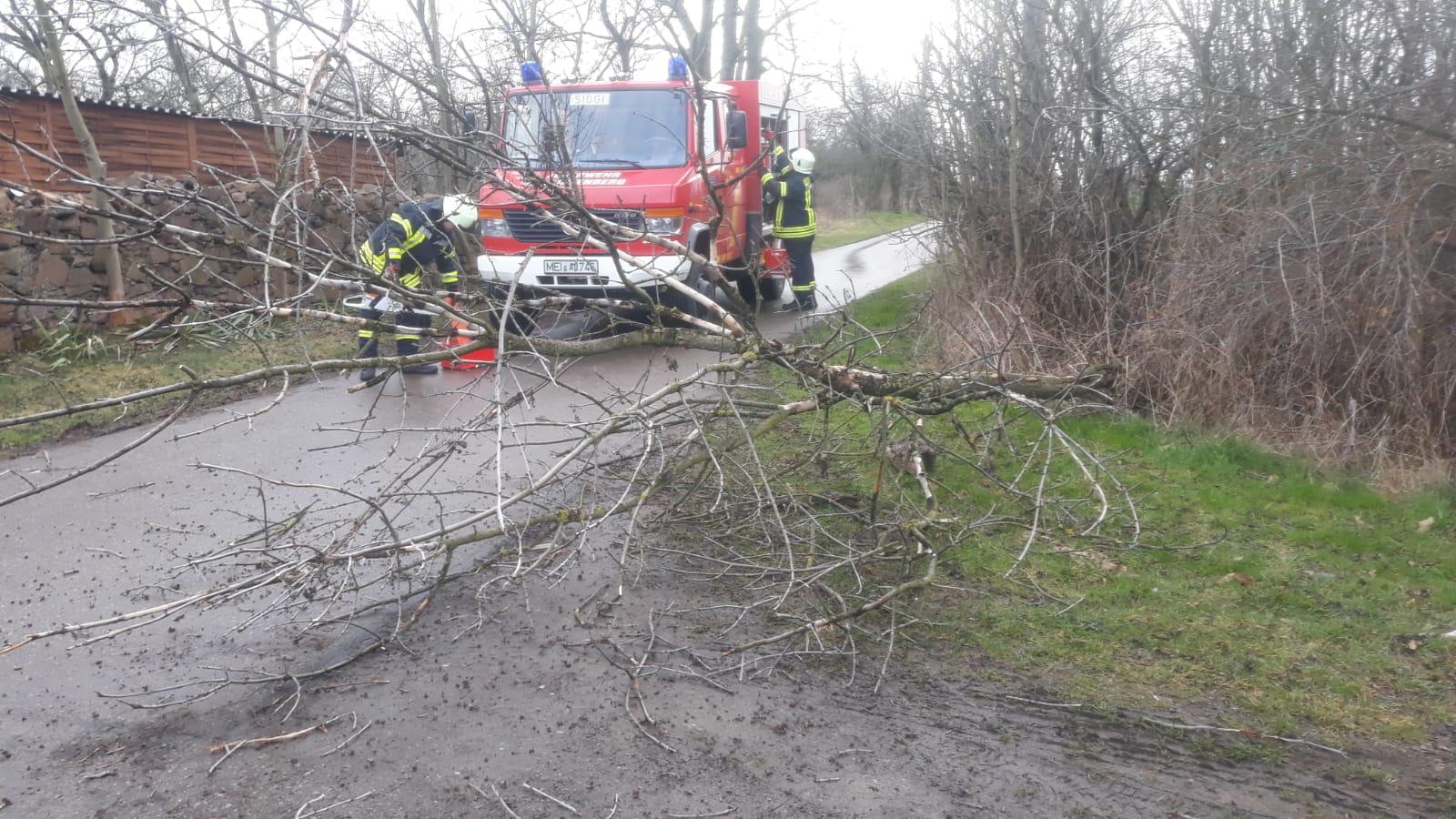 Baum in Stromleitung gestürzt